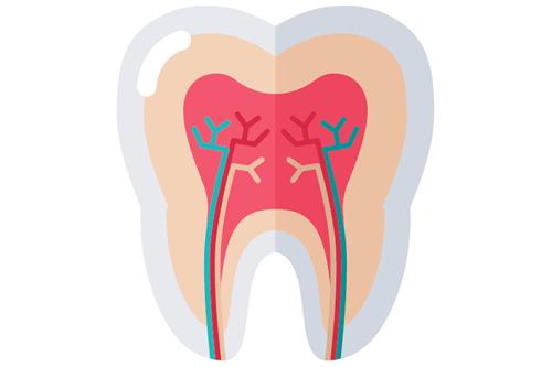 歯質(歯の強さ)